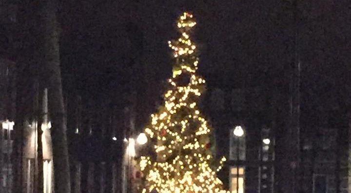 Ontmoeting bij de boom van Daan op het Oberonplein